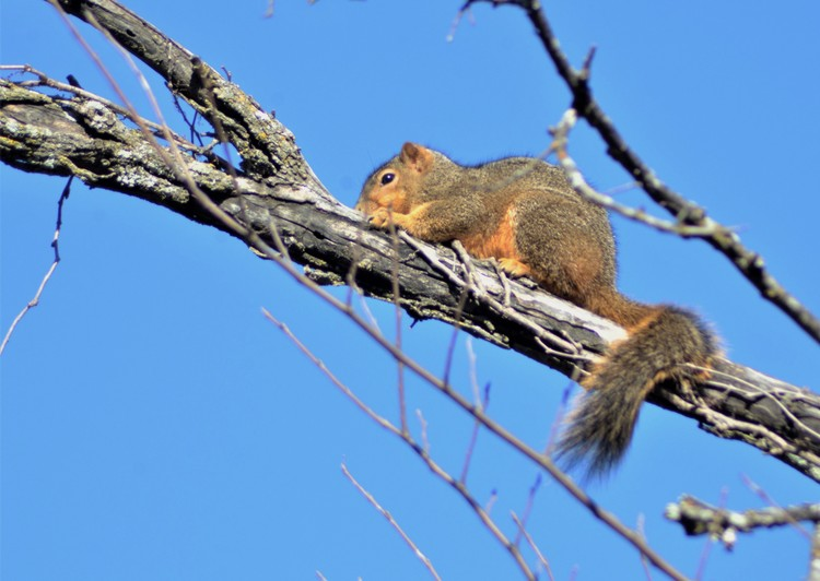 March Squirrel