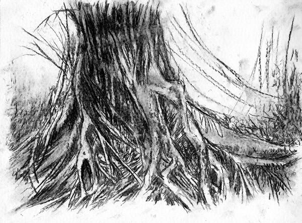 Balete Tree Drawing Balete Roots