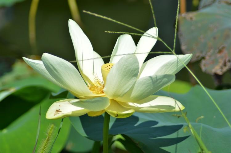 Lotus 8-25-18