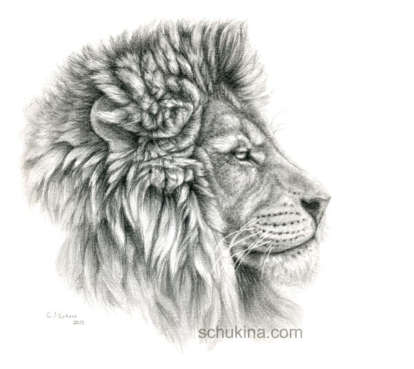 Lion Profile Drawing | www.imgkid.com - The Image Kid Has It!