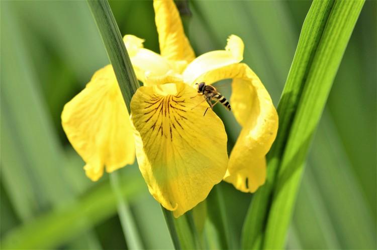 BEE ON YELLOW ..