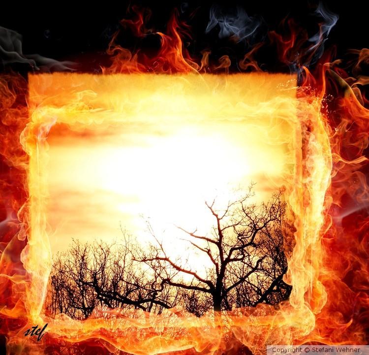 Californian forest fire