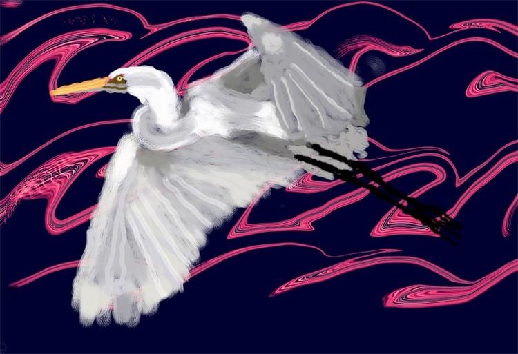 Heron in Flight (O821)