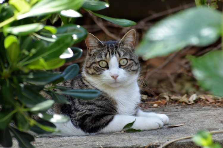 CAT IN A GARDEN ...