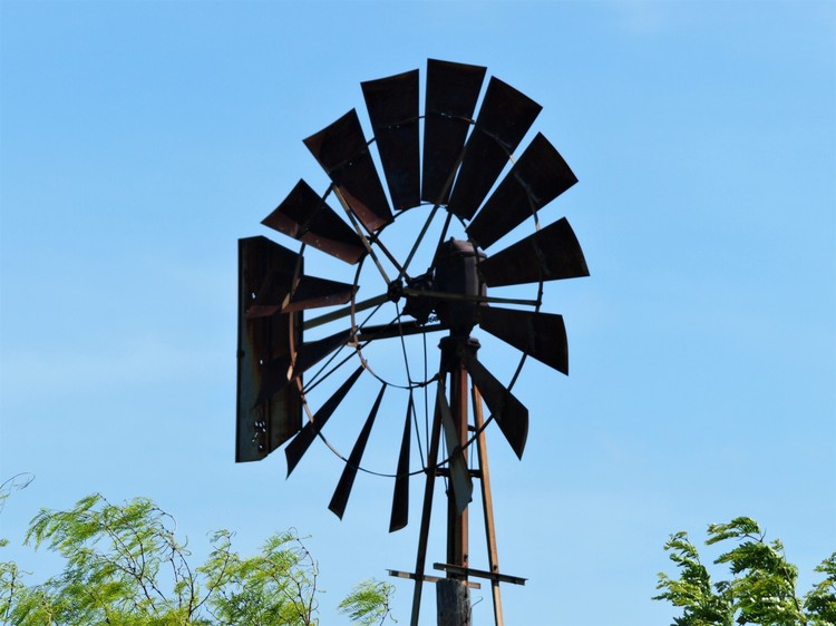 Old Windmill & Mesquite