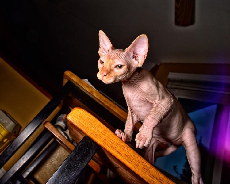 My cat Vladimir