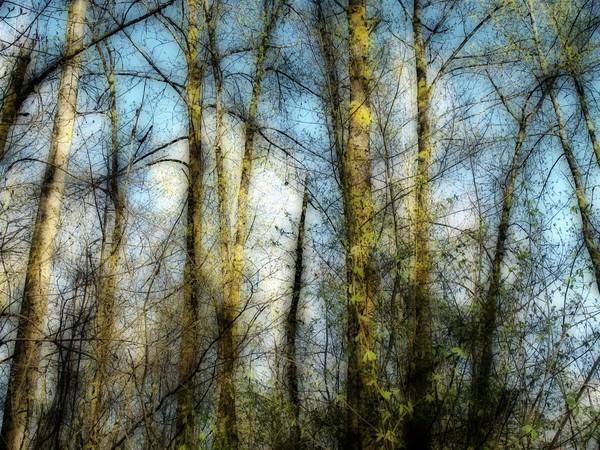 Tress in Early Winter - 1206
