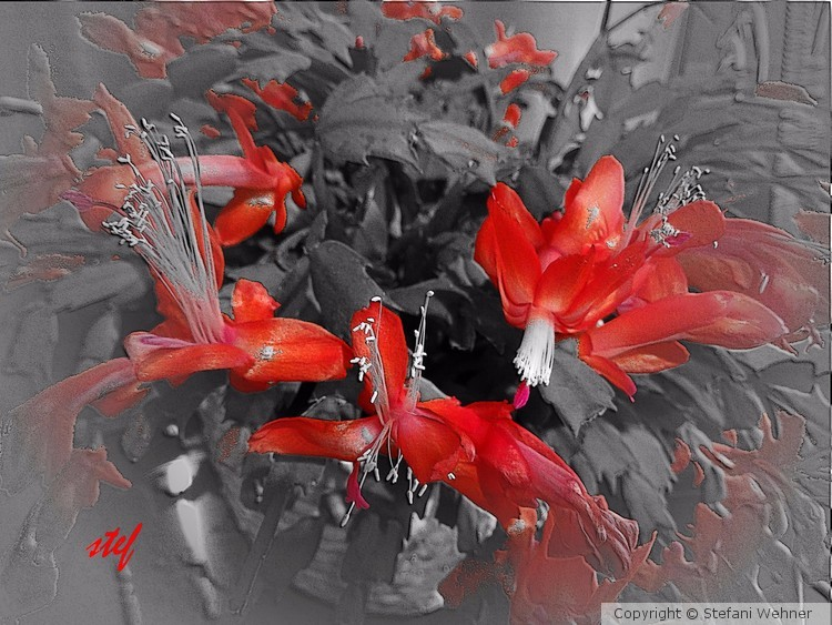 red blooming