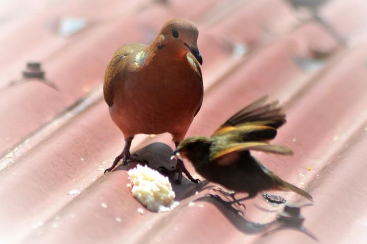 BIRDS SHARING ...
