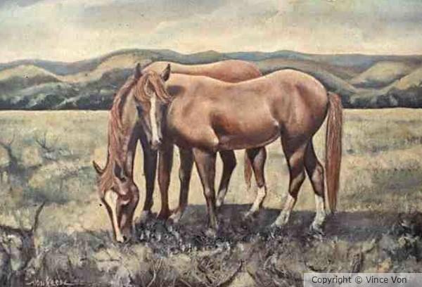 'Quarter Horses'