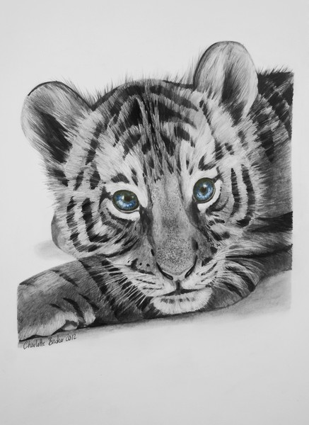 The Gallery For Gt Baby Tiger Drawing Tattoo