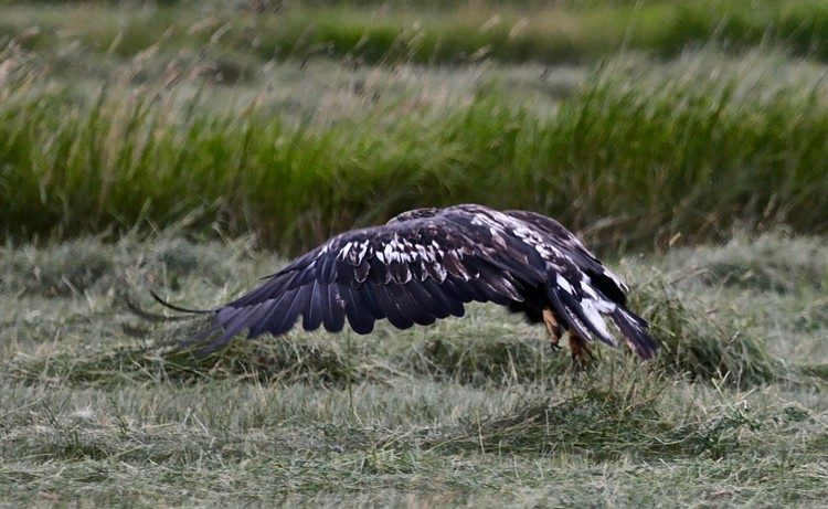 Eagle lift off