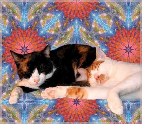 Two Cats On My Design