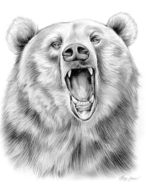 Gallery For gt Grizzly Bear Drawings Realistic