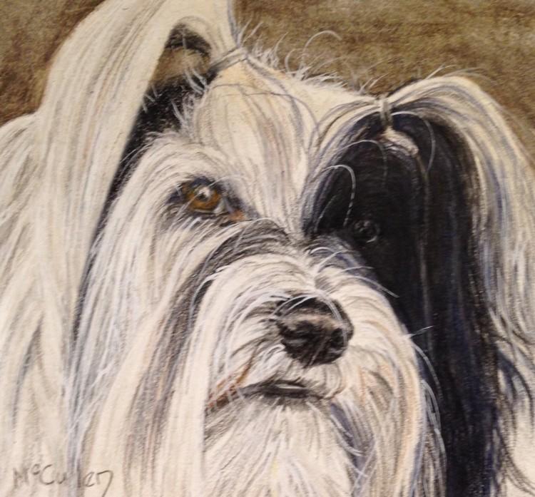 Kitsi the Tibetan Terrier
