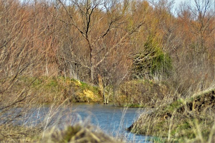 Woody Creek