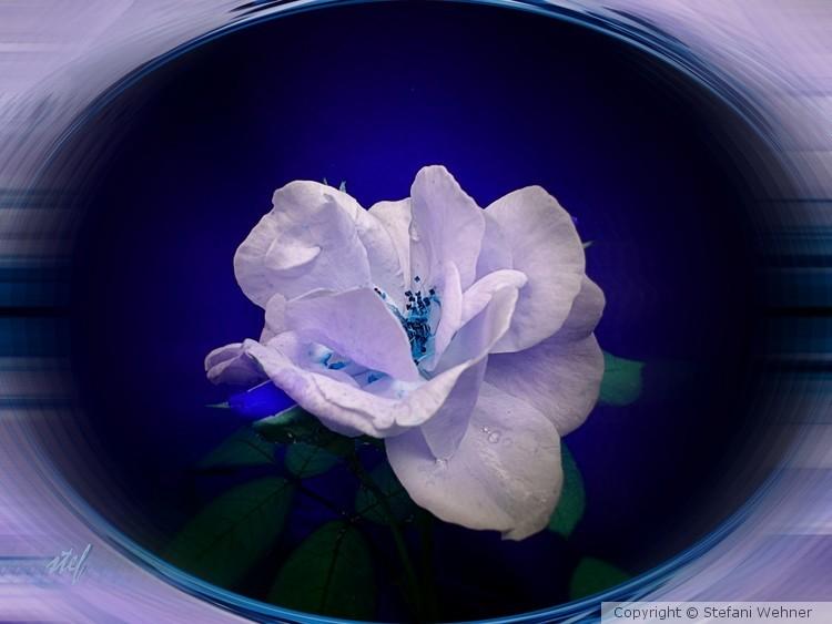 rose locket