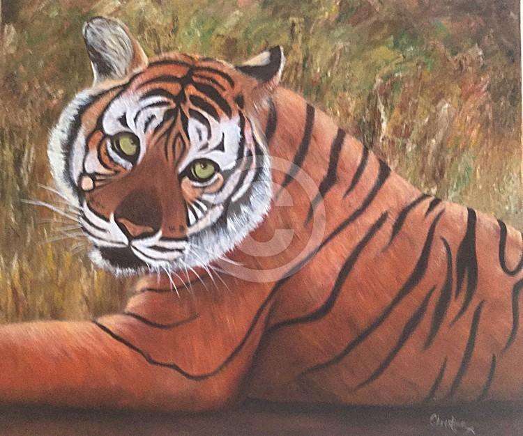 Tiger Ranthambore Indua