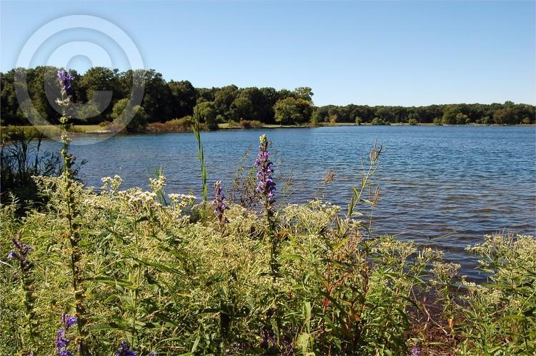 Wampum Lake Flowers in Summer