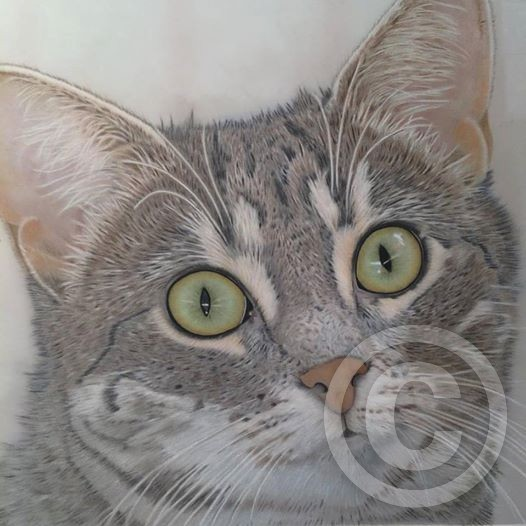 Abbey Colored Pencil Tabby Cat