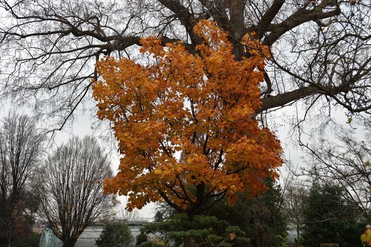 YELLOW TREE ...