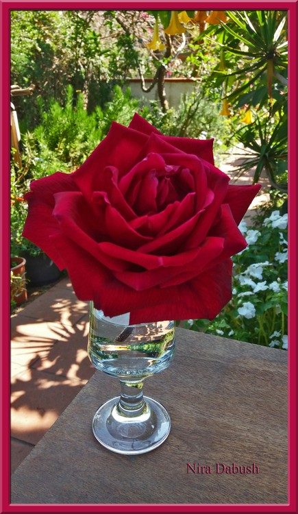 Every Rose Need Water