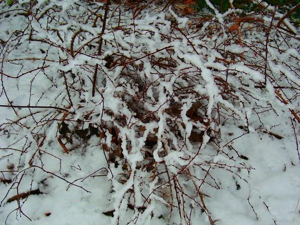 FRESH DECEMBER SNOW