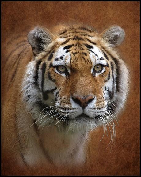 One Big Meow