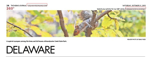 262nd News Journal Panorama-Merle the Squirrel