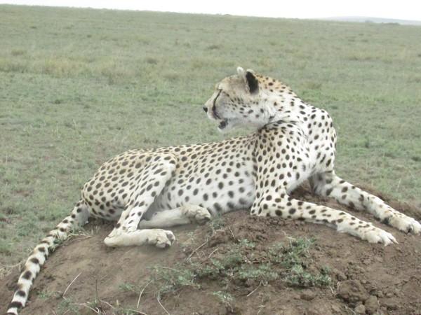 Safari Tanzania 2