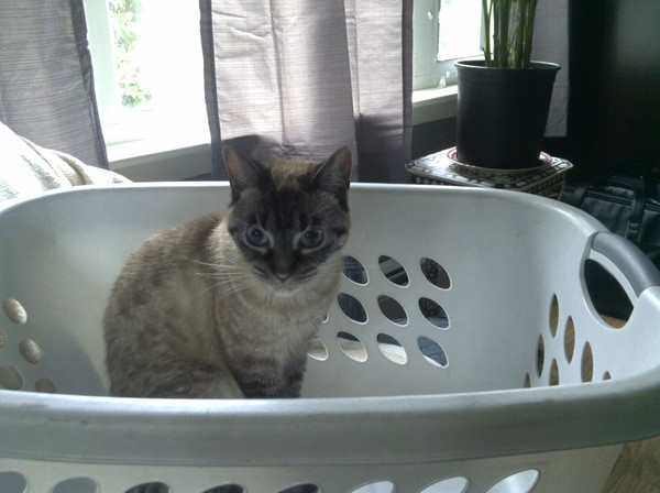 princess on washday