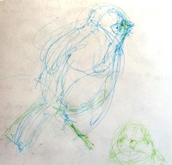 Song Bird Sketch