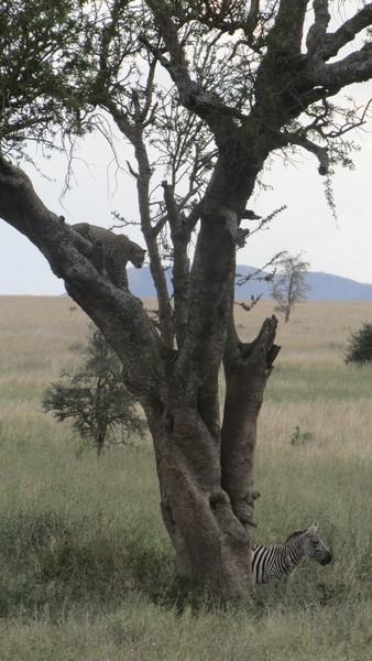 Safari Tanzania 3