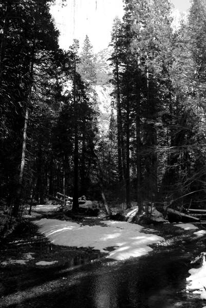 Yosemite Forest shot 1