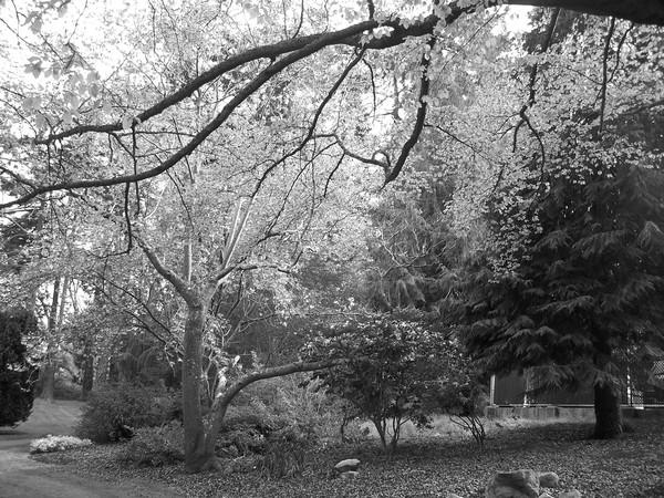 beauty trees
