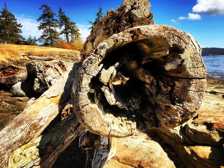 Driftwood, Salt Spring Island BC
