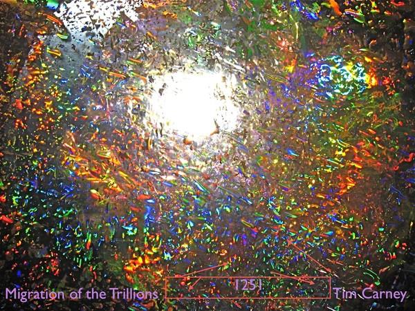 Trillions Seeking the Light 1251
