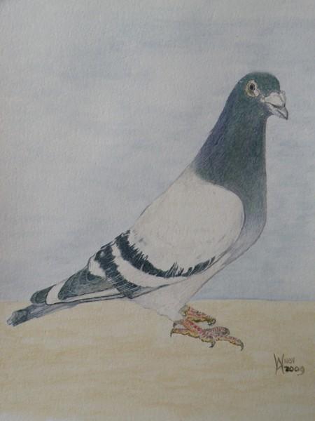 A winning bird