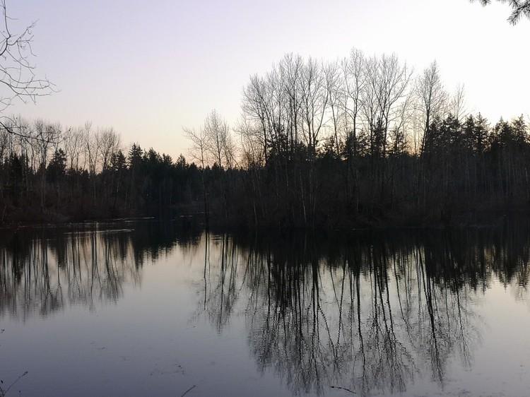 Brookswood Pond