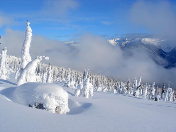 High Alpine Spruce Forest