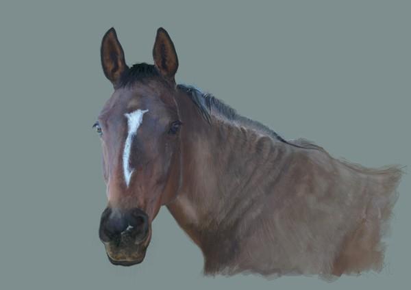 Sunday the Horse