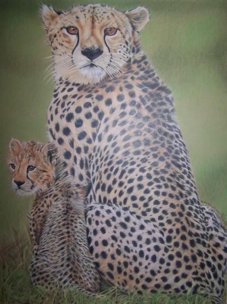 Cheetahs for Danni