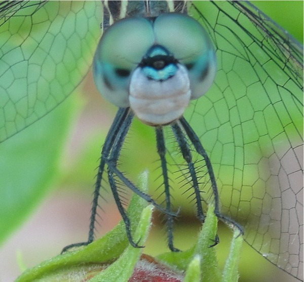 Dragonfly Smile!