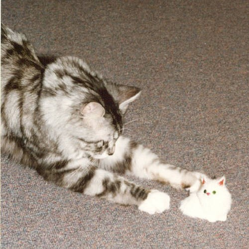WHAT'S THIS...The Incredible Shrinking Cat?