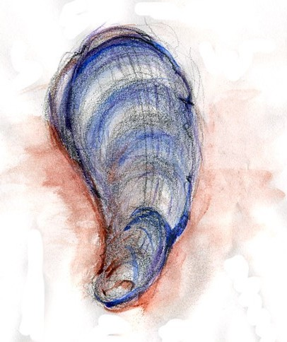 Mussel Shell Watercolor