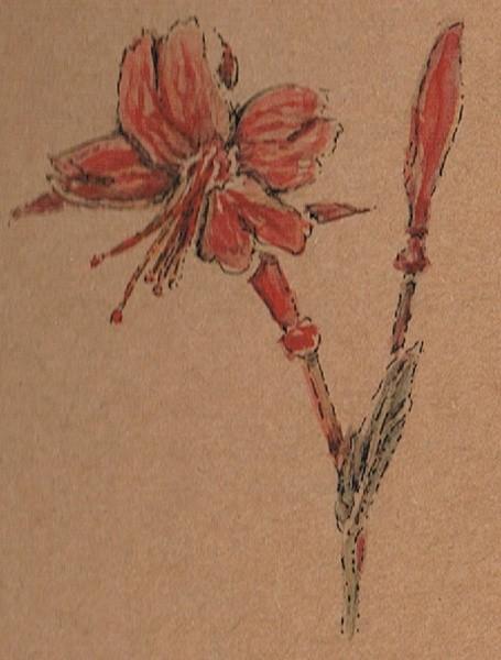 California Fuchsia and Bud Watercolor