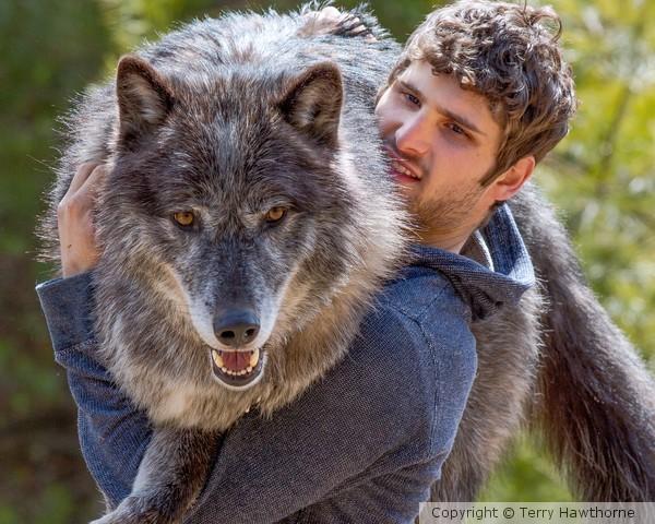 wolf_041413_2