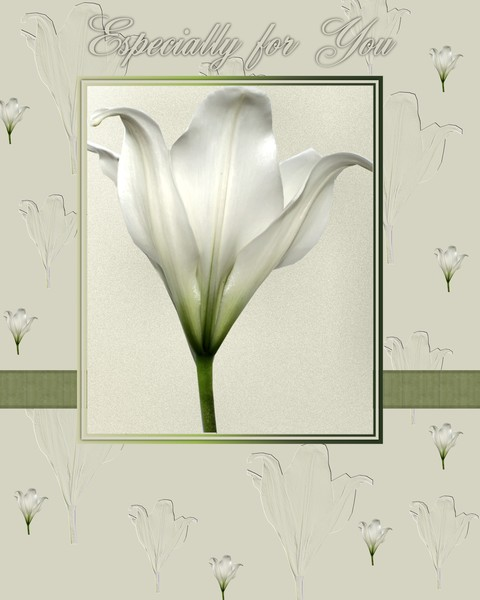 lily birthday card
