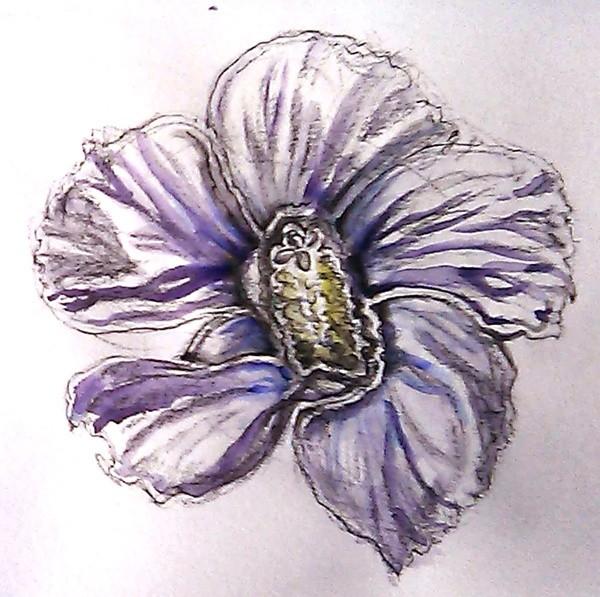 Purple Hibiscus Watercolor