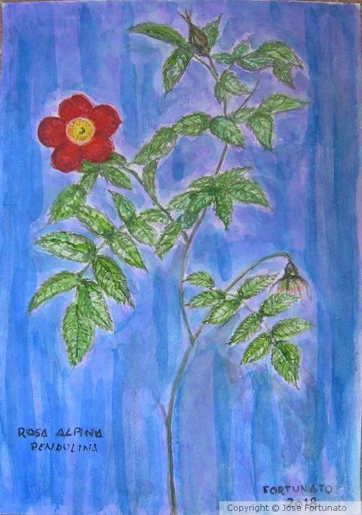 Rosa Alpina Pendulina